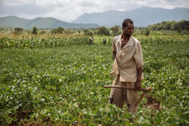 Soybean farmer in Malawi. IFPRI/Mitchell Maher via Flickr, CC BY-NC-ND